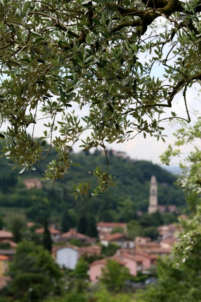 1-Avesa e gli ulivi