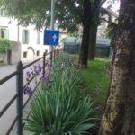 13-Iris avesane