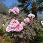 49-Bei fiori e la palma
