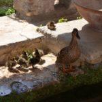 01-Primavera nuova famiglia a Camaldola