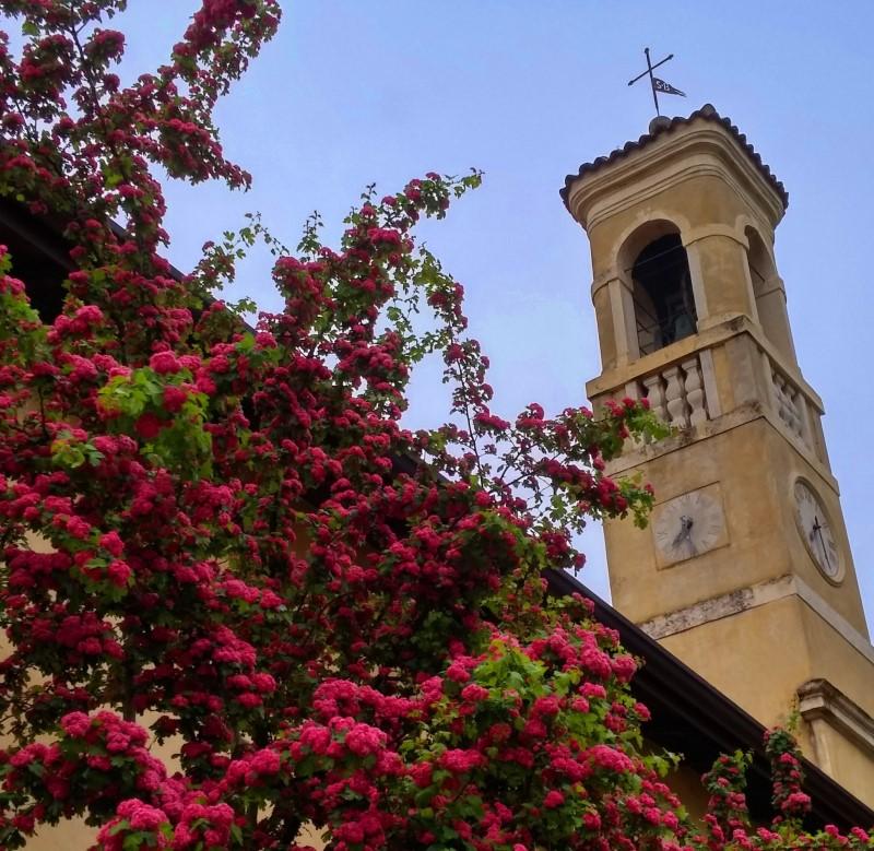 26-Fiori di San Bernardo
